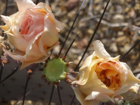 flowers unfolding